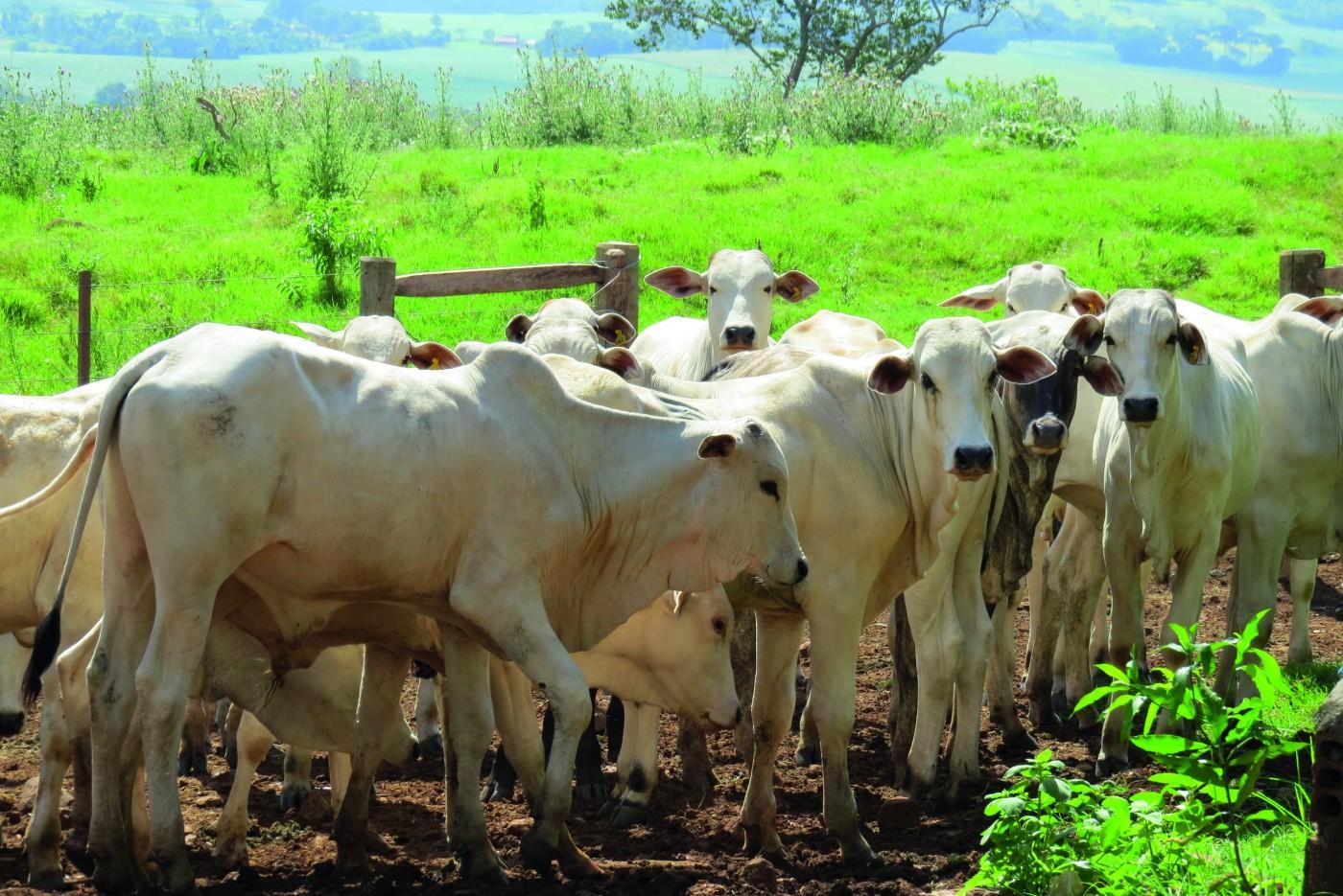 Maior rastreabilidade dos fornecedores indiretos na pecuária contribui para  atender às exigências do mercado europeu – O Presente Rural