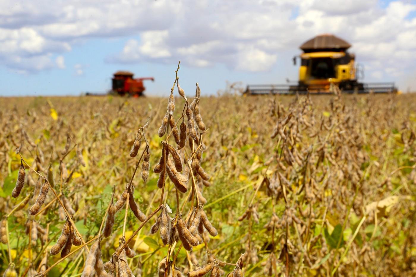 Comercialização futura de soja para 2020/21 pode favorecer ...